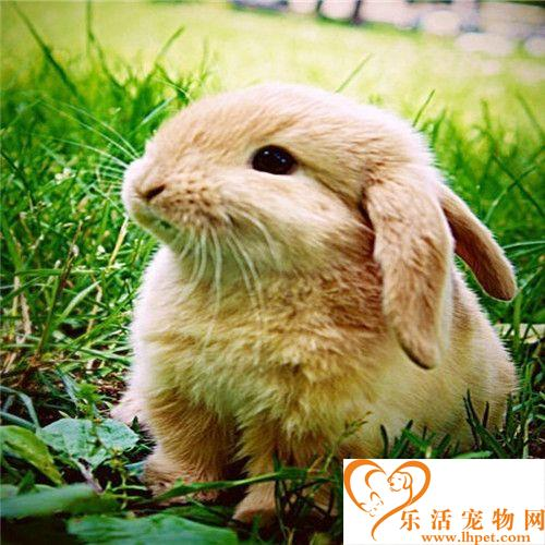 猫和兔子能一起养吗  猫和兔子能成为好朋友