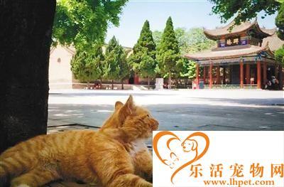 碑林博物馆网红猫抓伤幼童 小猫一家恐驱逐