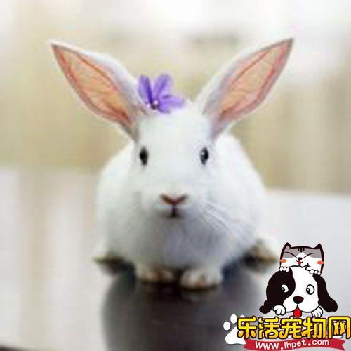 兔子为什么不怀孕 兔子不怀孕的原因是什么