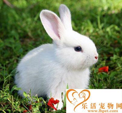 兔子成年需要多久 大约半年就可以成年