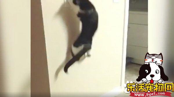 一秒操控白天黑夜 猫咪化身跳跳虎半夜玩开关