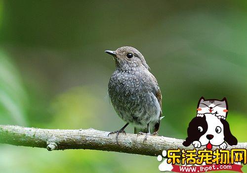 家里养鸟好不好 家庭养鸟的益处及注意问题