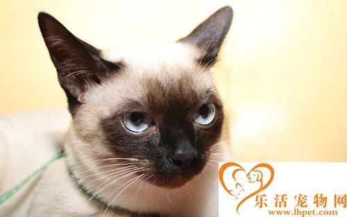 猫卡里西病 猫卡里西病的症状及防治方法