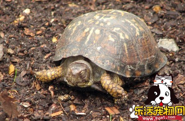 家里养乌龟的风水 乌龟水缸的周围环境