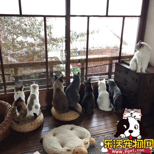 东京大雪超美 一群猫咪在窗前赏雪似有禅意