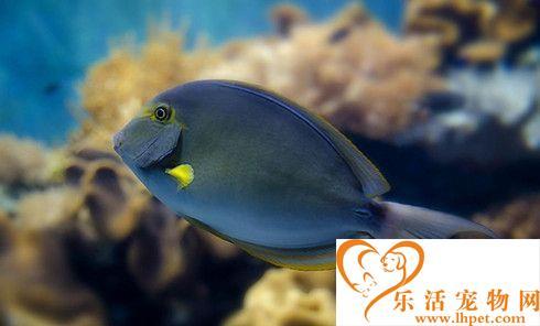 混养鱼最佳搭配 热带鱼混养需要注意的事项