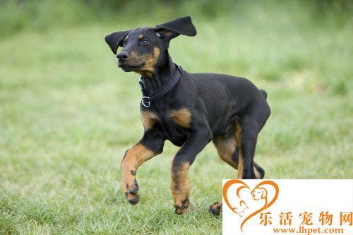 狗狗的种类 十种现实生活中最常见的狗狗