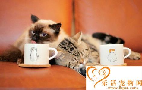 巴厘猫最多能活多少年 帅气的巴厘猫
