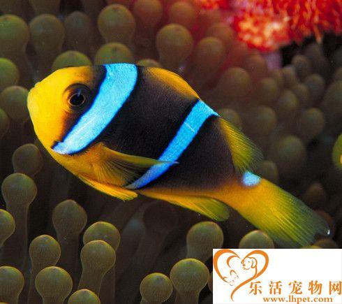 热带鱼怎么区分公母 热带鱼分辨公母的方法