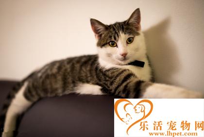 什么宠物猫便宜 不同品种的猫咪价格不同