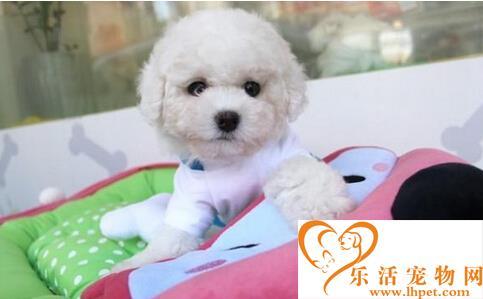最便宜的狗狗品种 这些狗狗可爱又价格亲民