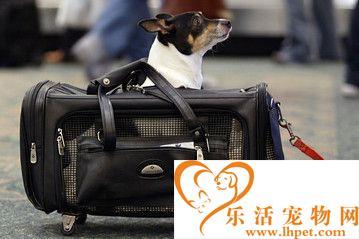 怎样带宠物回国