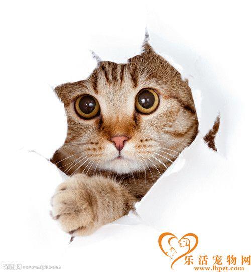 猫为什么萌 猫咪的性格赋予猫咪的天性