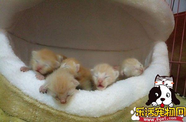 7只小萌猫躲猫窝取暖 被窝好像一只哈仔