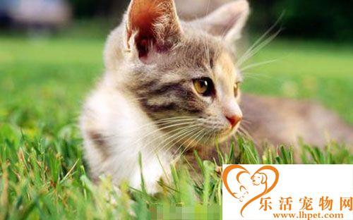 宠物猫的品种价格 购买宠物猫的注意事项