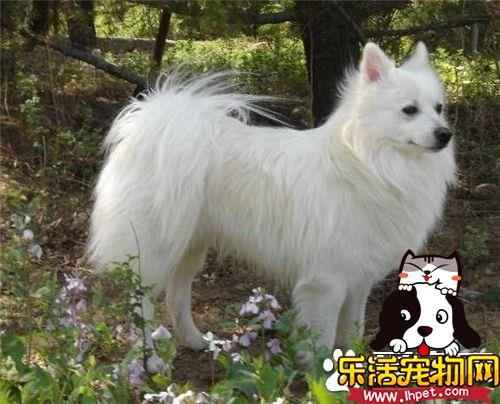 银狐犬几岁脱牙 出生后3―5周小狗长牙