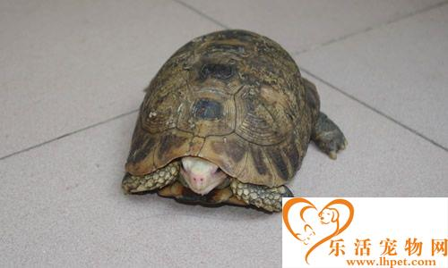 怎么挑选乌龟 五种方法可以鉴别乌龟好坏