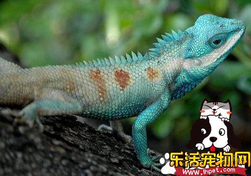 蜥蜴的天敌是什么 哺乳动物全都猎食蜥蜴