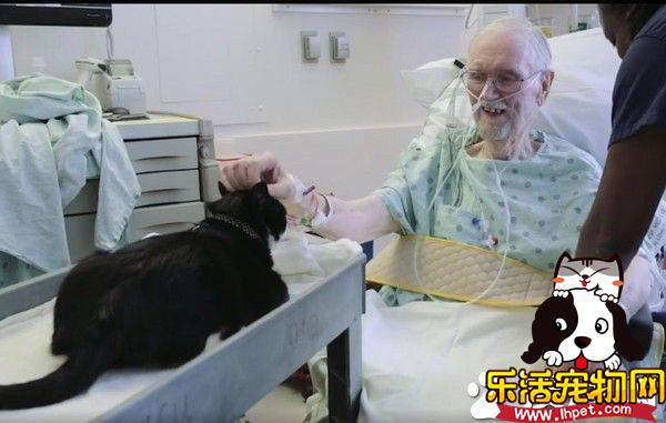 街猫摇身一变成治疗猫 每天搭推车巡房