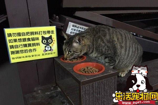 爱猫人士擅放有色饲料 猫咪吃下之后狂吐不止