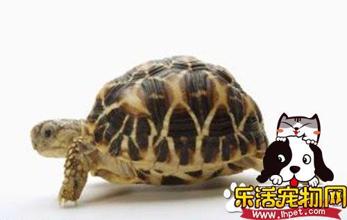 养乌龟有什么说法 养龟能起到化煞的作用