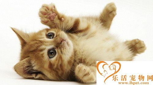 猫冬天会冷吗 猫冬天饲养管理需要注意的事项