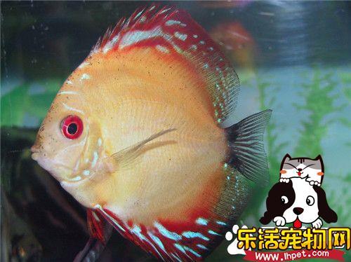 中型热带鱼有哪些 教你挑选心仪的热带鱼