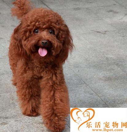 宁波男子擅自将泰迪犬抱回家被警方拘留